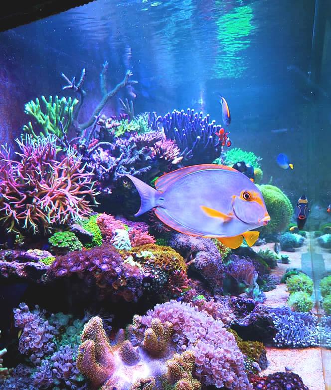 morski akvarij